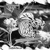 fr-bw-paperkite-bfly-stlz-DSC09281