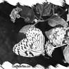 fr-bw-paperkite-bfly-stlz-DSC09288