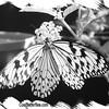fr-bw-paperkite-bfly-stlz-DSC09271