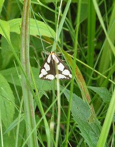 moth, SLHS, june 29, 2006