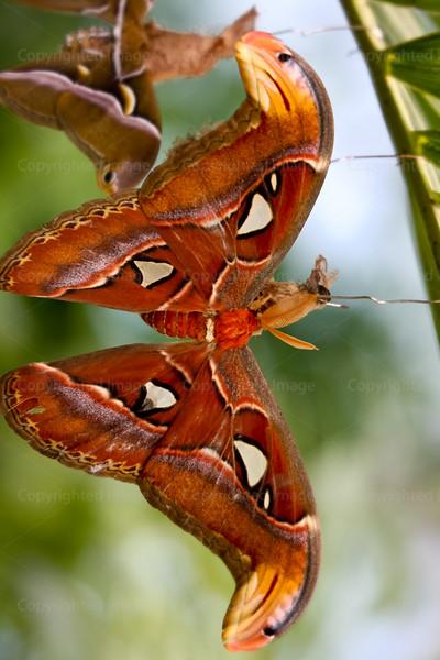 CRay-Butterflies-2157