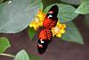 CRay-Butterflies-2362