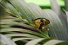 CRay-Butterflies-2578