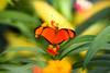 CRay-Butterflies-2221