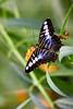 CRay-Butterflies-2343