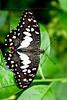 London Butterflies