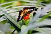 CRay-Butterflies-2294