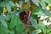 CRay-Butterflies-2171