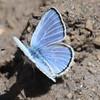 Melissa blue