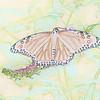 Color Sketch Butterfly Art by Deborah Carney