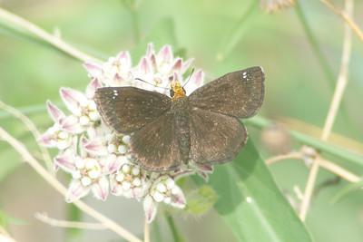 Montosa Canyon Butterfly Fieldtrip