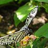 paperkite-bfly-stlz-DSC09291