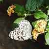 paperkite-bfly-stlz-DSC09288