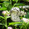 paperkite-bfly-stlz-DSC09281