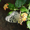 paperkite-bfly-stlz-DSC09286