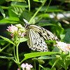 paperkite-bfly-stlz-DSC09282