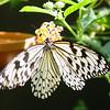 paperkite-bfly-stlz-DSC09271