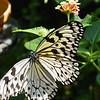 paperkite-bfly-stlz-DSC09276