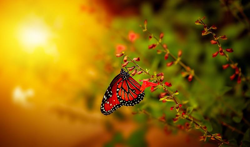 Butterfly-103.jpg