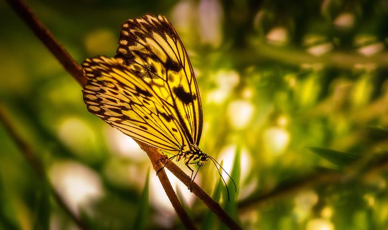 Butterfly-195.jpg
