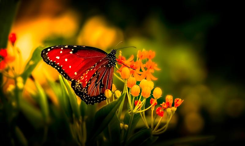 Butterfly-152.jpg