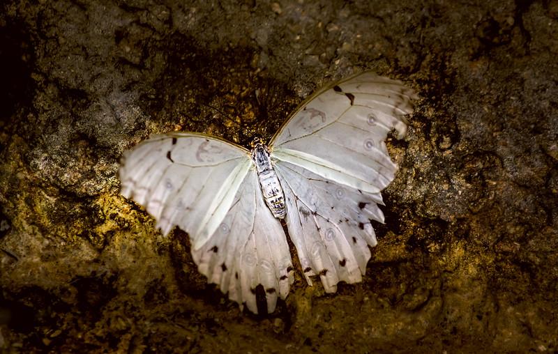 Butterfly-027.jpg
