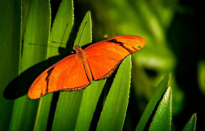 Butterfly-122.jpg