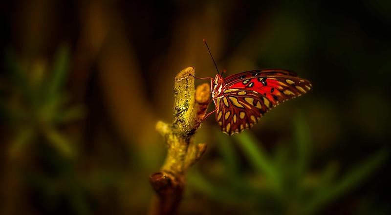 Butterfly-002.jpg