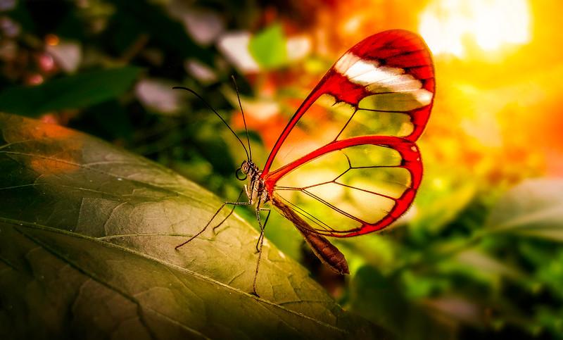 Butterfly-073.jpg