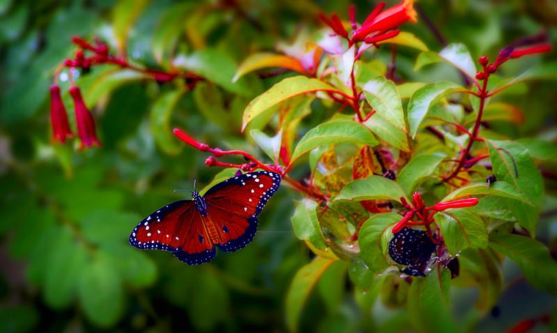 Butterfly-099.jpg
