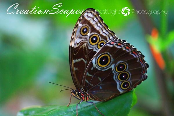 Butterflies in God's Creation