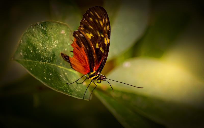 Butterfly-037.jpg