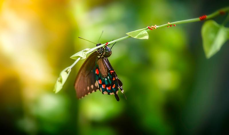 Butterfly-179.jpg