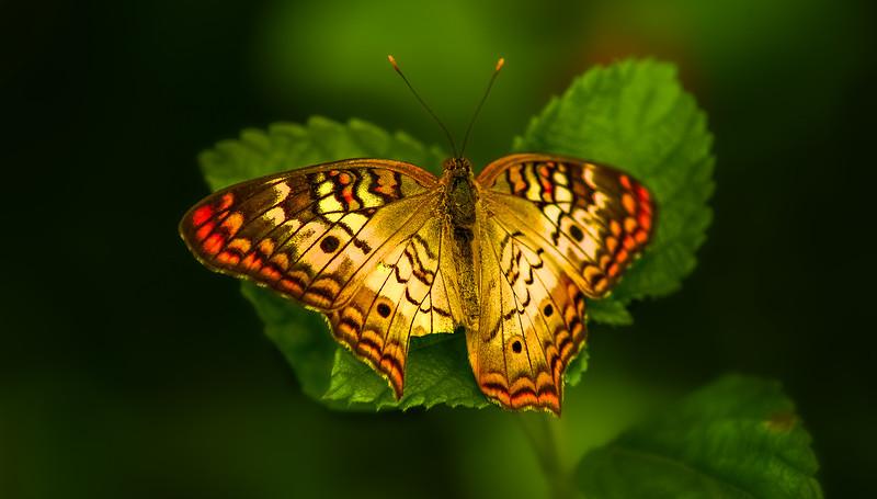 Butterflies-005.jpg