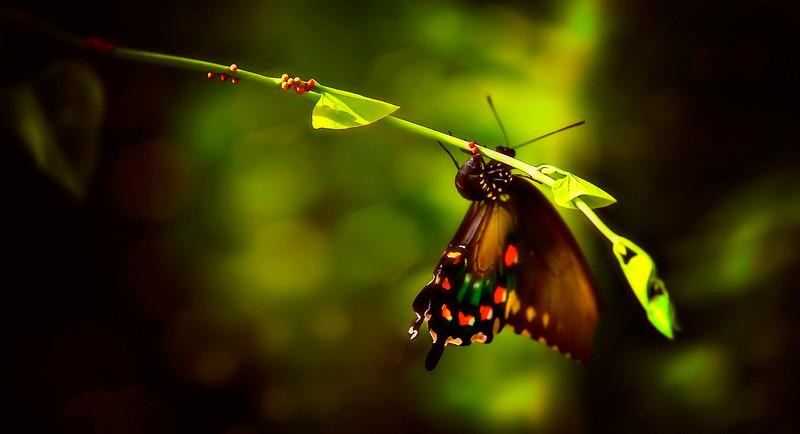 Butterfly-093.jpg