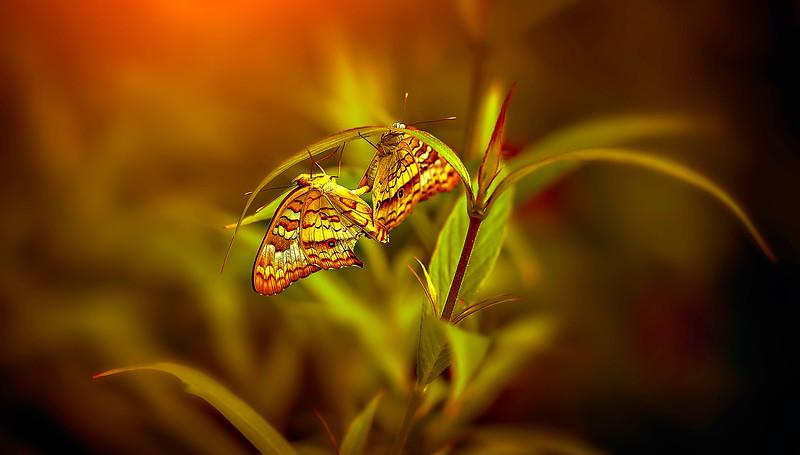 Butterfly-201.jpg
