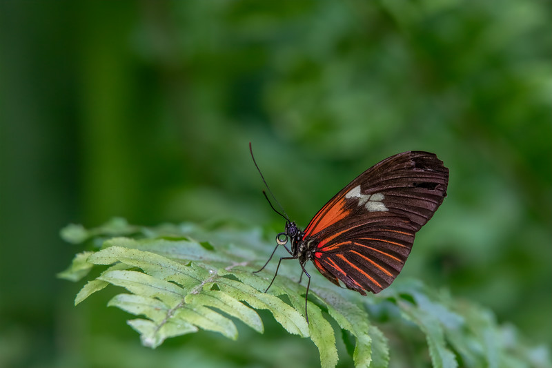 Butterfly 69A3848