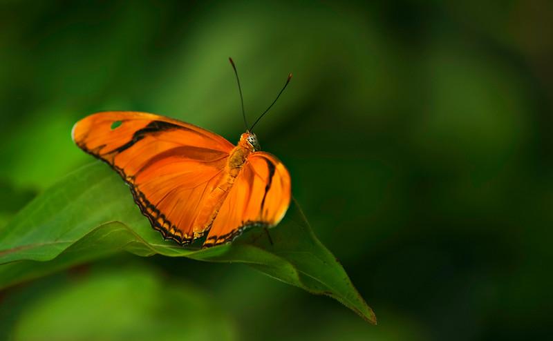 Butterfly-142.jpg