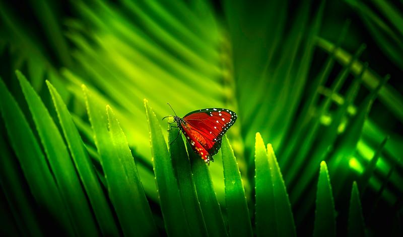 Butterfly-190.jpg