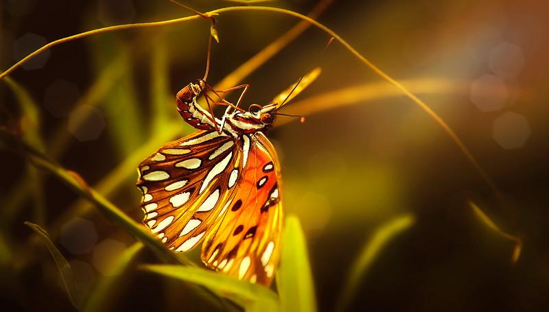 Butterfly-091.jpg