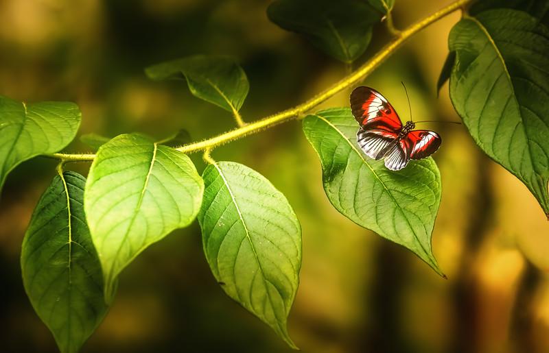 Butterfly-089.jpg
