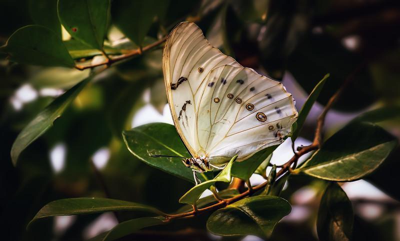 Butterfly-183.jpg