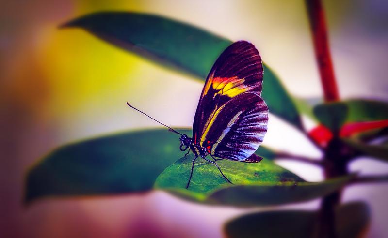 Butterfly-191.jpg