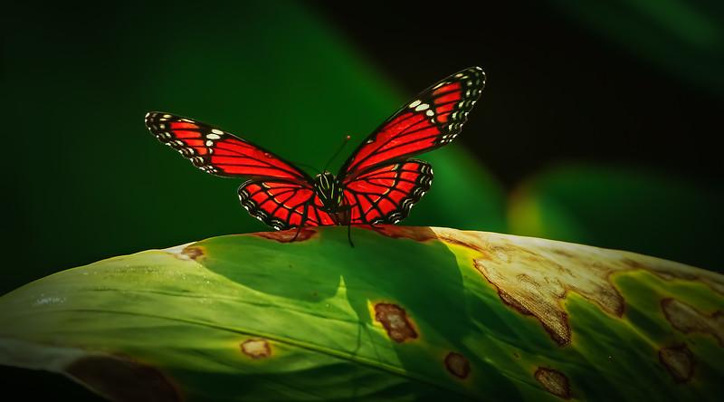 Butterfly-064.jpg
