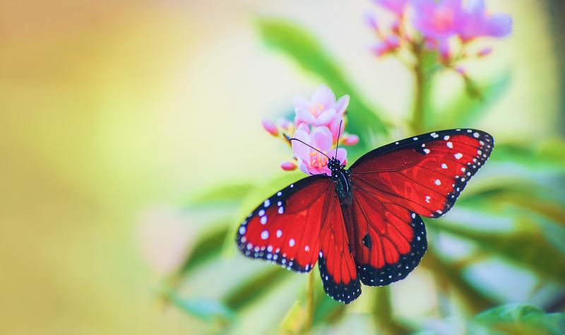 Butterfly-164.jpg