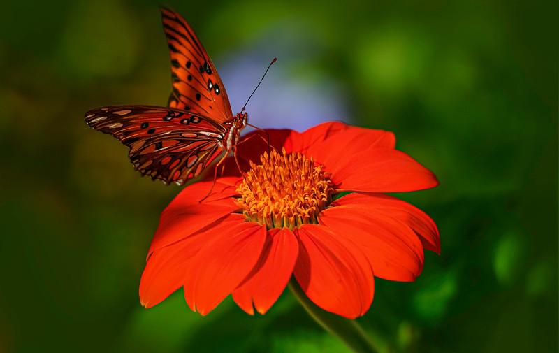 Butterfly-158.jpg