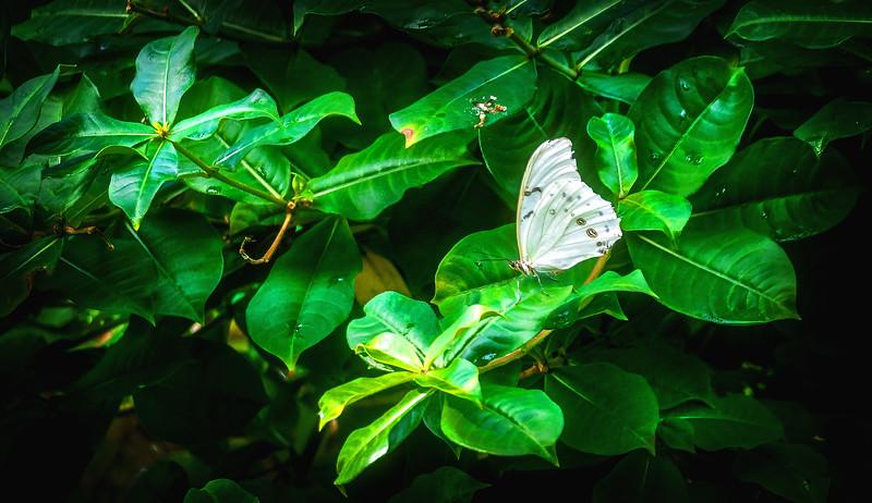 Butterfly-209.jpg