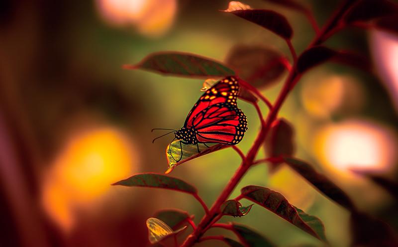 Butterfly-005.jpg