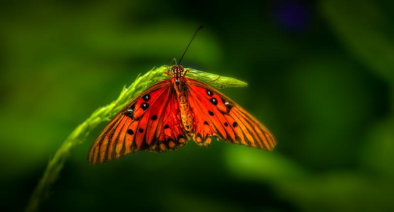 Butterflies-006.jpg