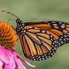 Butterfly E4A6238